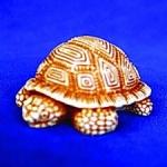 35.2 Черепаха